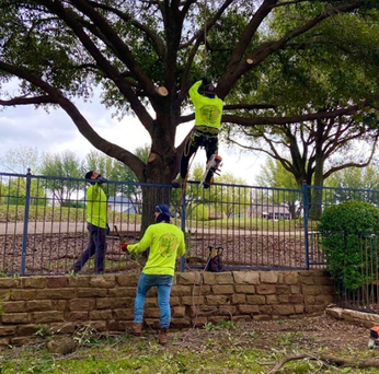 Licensed tree service in Plano Texas
